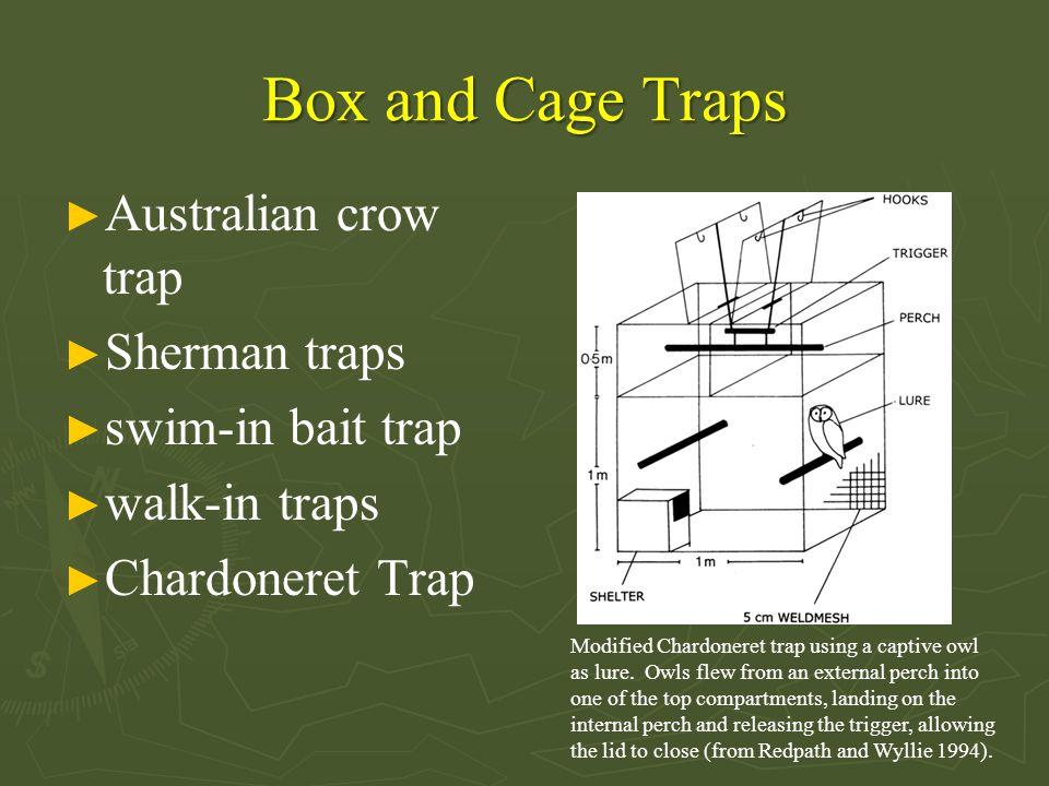 Box and Cage Traps ► Australian crow trap ► Sherman traps ► swim-in bait trap ► walk-in traps ► Chardoneret Trap Modified Chardoneret trap using a captive owl as lure.