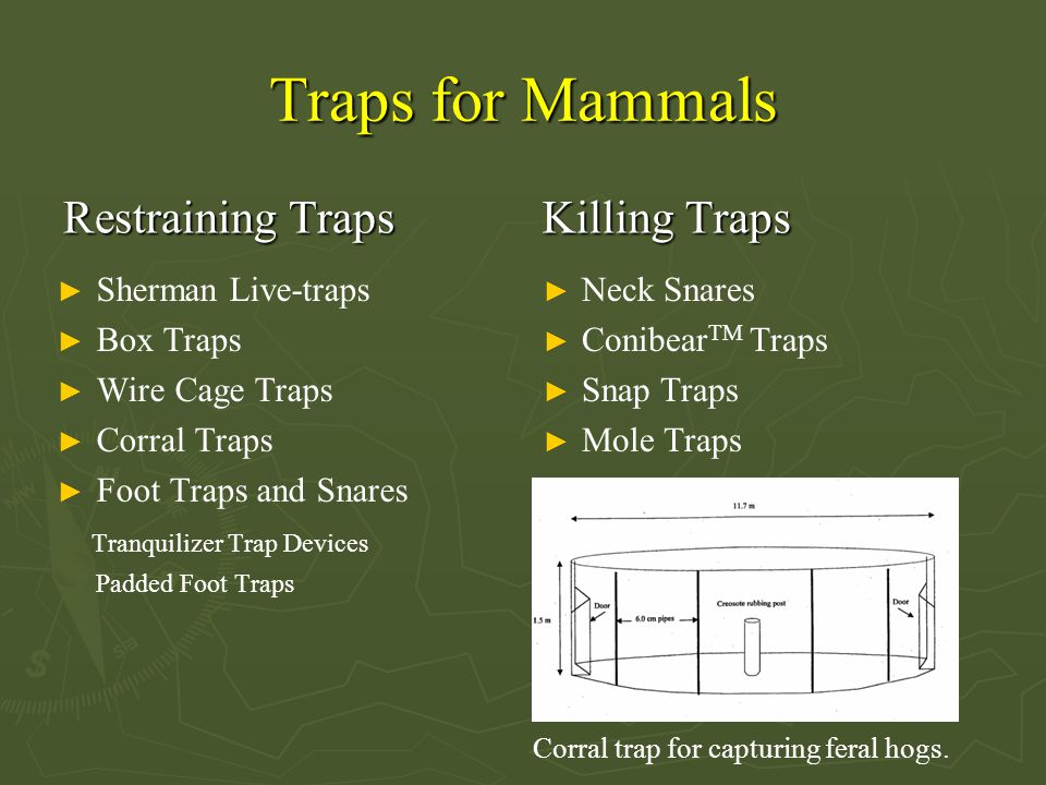 Traps for Mammals Restraining Traps ► Sherman Live-traps ► Box Traps ► Wire Cage Traps ► Corral Traps ► Foot Traps and Snares Tranquilizer Trap Devices Padded Foot Traps Killing Traps ► Neck Snares ► Conibear TM Traps ► Snap Traps ► Mole Traps Corral trap for capturing feral hogs.