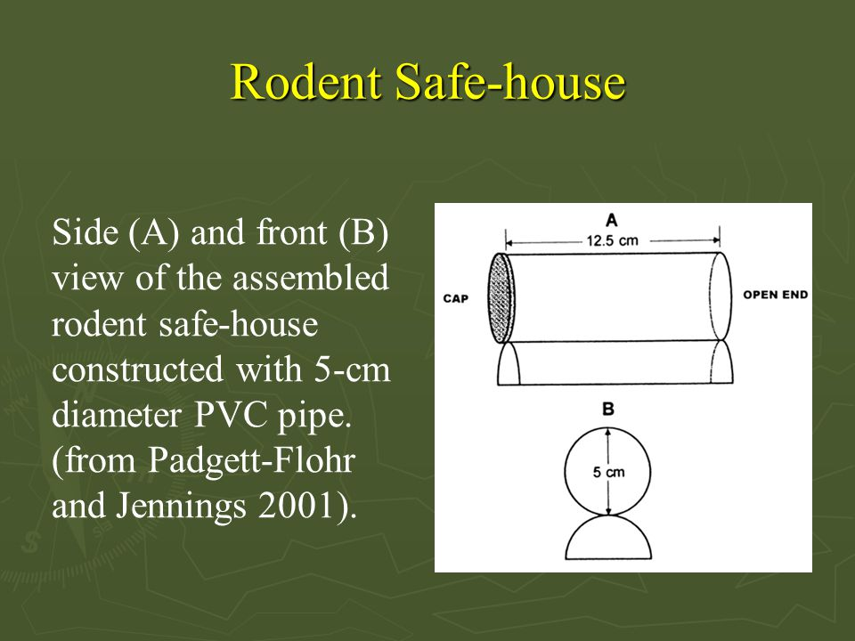 Rodent Safe-house Side (A) and front (B) view of the assembled rodent safe-house constructed with 5-cm diameter PVC pipe.