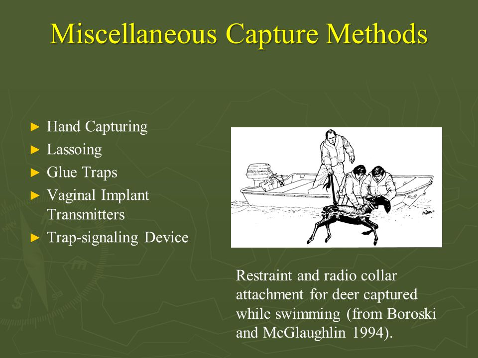 Miscellaneous Capture Methods ► Hand Capturing ► Lassoing ► Glue Traps ► Vaginal Implant Transmitters ► Trap-signaling Device Restraint and radio coll