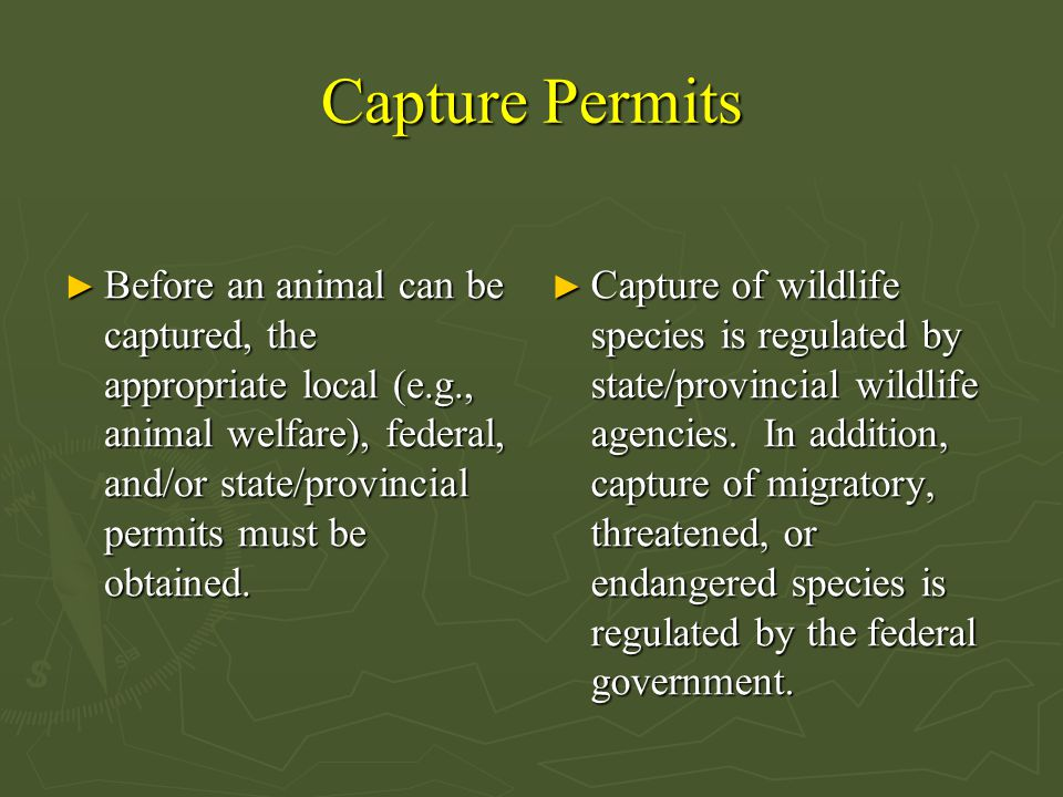Capture Permits ► Before an animal can be captured, the appropriate local (e.g., animal welfare), federal, and/or state/provincial permits must be obtained.