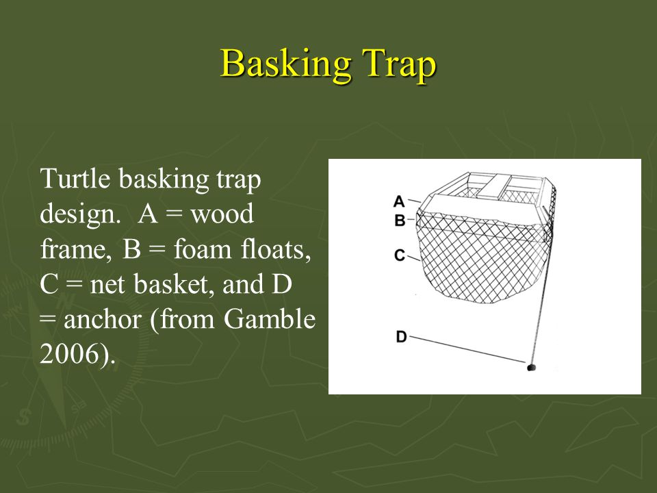 Basking Trap Turtle basking trap design. A = wood frame, B = foam floats, C = net basket, and D = anchor (from Gamble 2006).