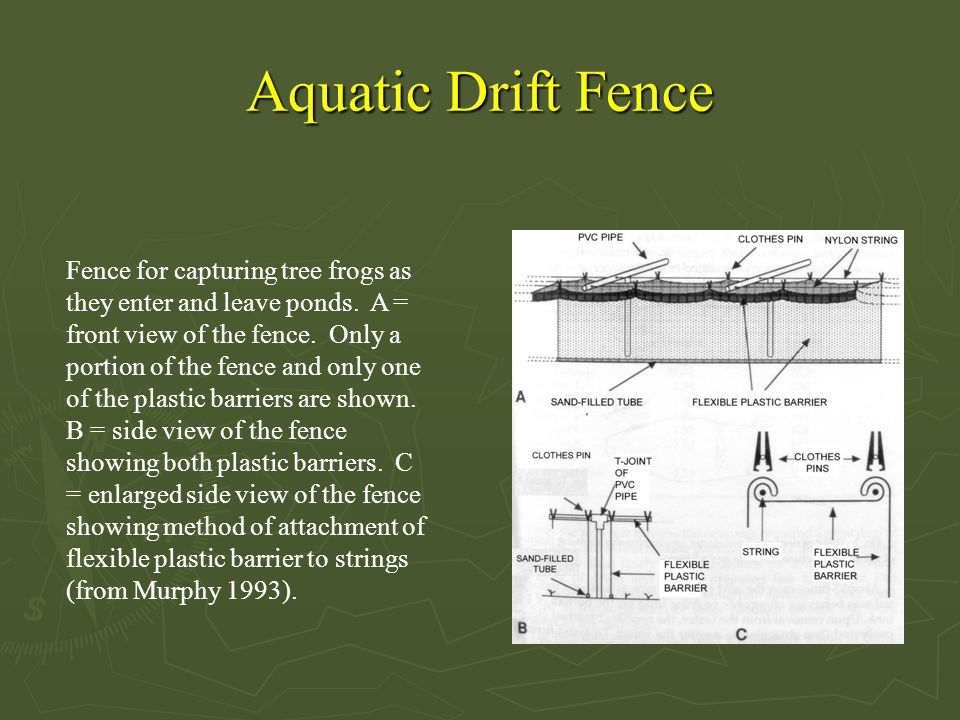 Aquatic Drift Fence Fence for capturing tree frogs as they enter and leave ponds.