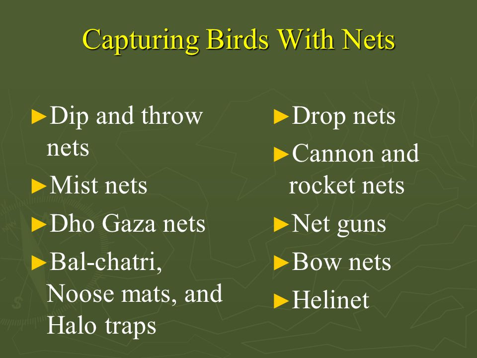 Capturing Birds With Nets ► Dip and throw nets ► Mist nets ► Dho Gaza nets ► Bal-chatri, Noose mats, and Halo traps ► Drop nets ► Cannon and rocket nets ► Net guns ► Bow nets ► Helinet