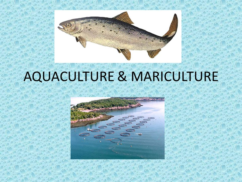 AQUACULTURE The broad term aquaculture refers to the breeding, rearing, and harvesting of plants and animals in all types of water environments, including ponds, rivers, lakes, and the ocean.