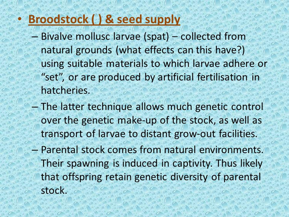 Broodstock ( ) & seed supply – Bivalve mollusc larvae (spat) – collected from natural grounds (what effects can this have?) using suitable materials to which larvae adhere or set , or are produced by artificial fertilisation in hatcheries.