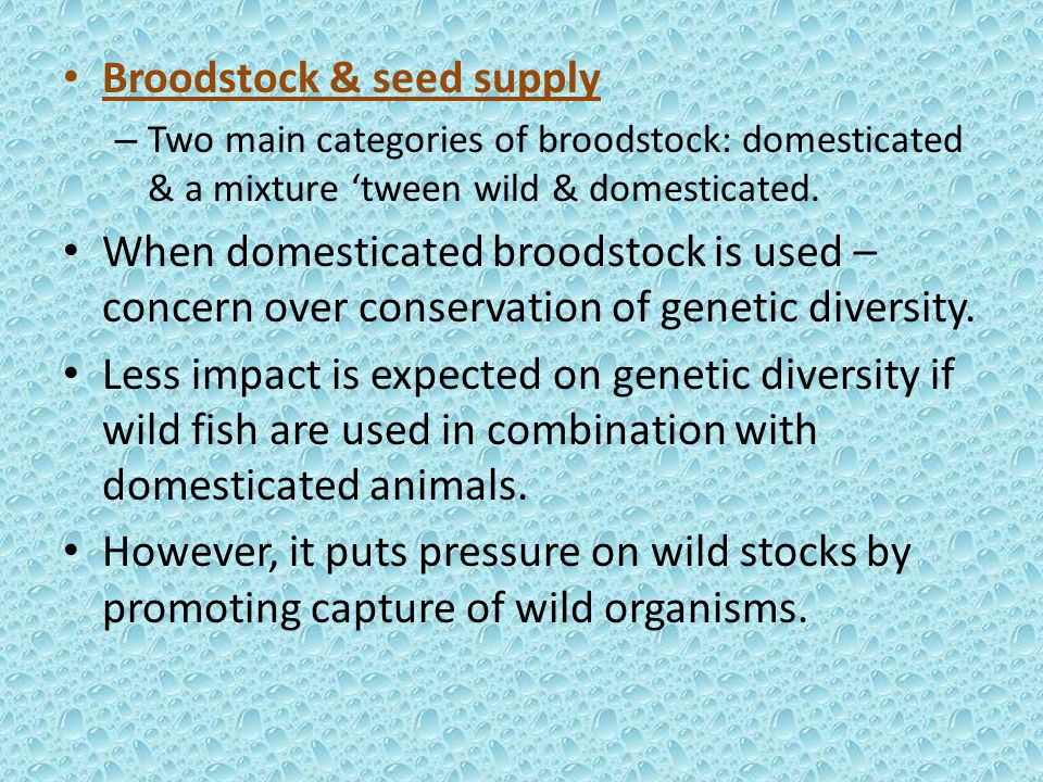 Broodstock & seed supply – Two main categories of broodstock: domesticated & a mixture 'tween wild & domesticated.