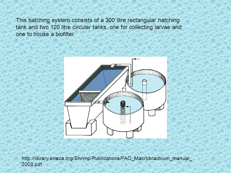 This hatching system consists of a 300 litre rectangular hatching tank and two 120 litre circular tanks, one for collecting larvae and one to house a biofilter http://library.enaca.org/Shrimp/Publications/FAO_Macrobrachium_manual_ 2003.pdf