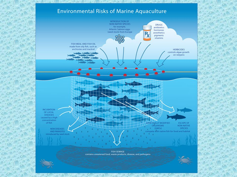 TECHNOLOGICAL PROGRESS IN AQUACULTURE Selective breeding approaches have been successful at creating improved breeds of fish (e.g.
