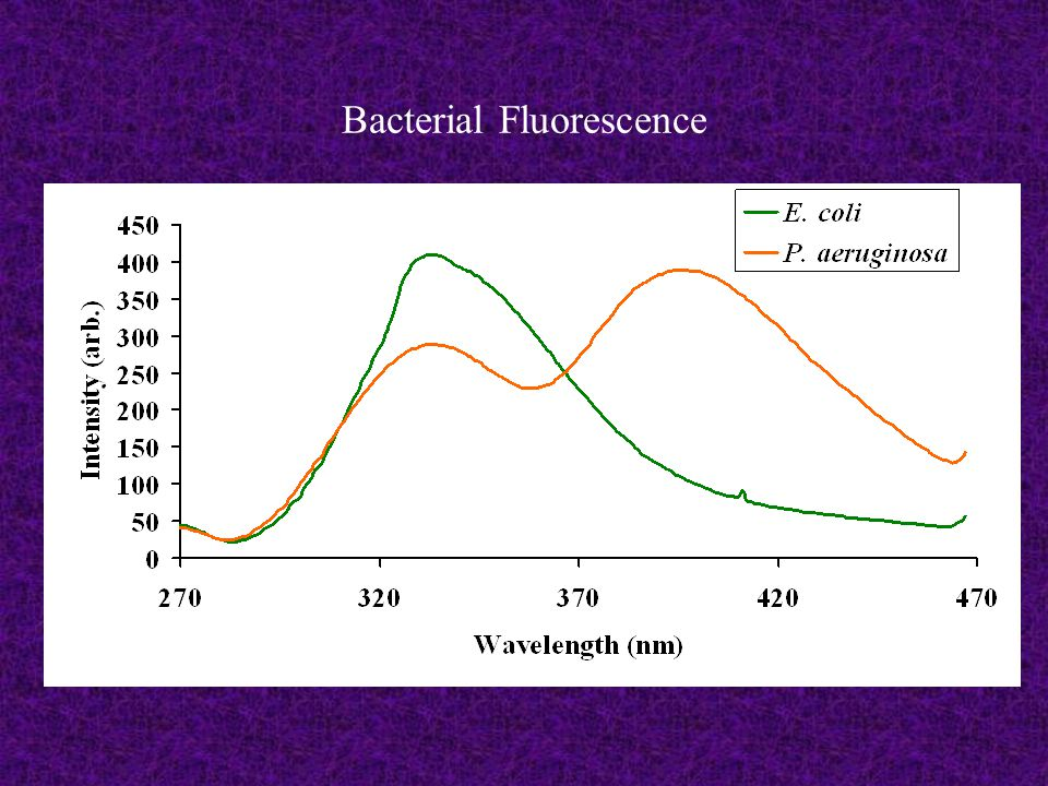 Bacterial Fluorescence