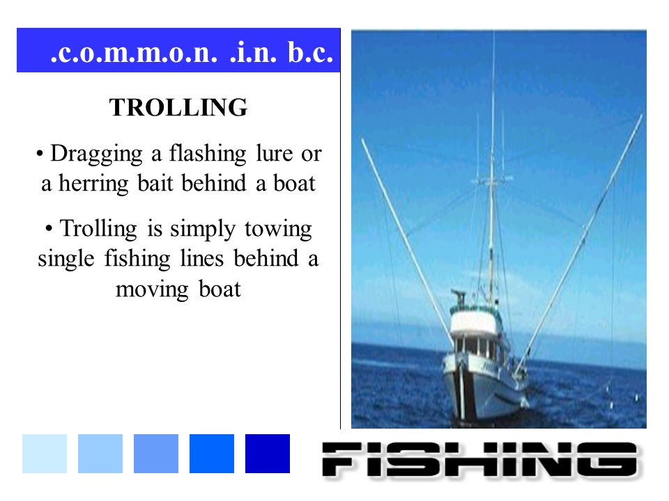 .c.o.m.m.o.n..i.n. b.c. TROLLING Dragging a flashing lure or a herring bait behind a boat Trolling is simply towing single fishing lines behind a movi