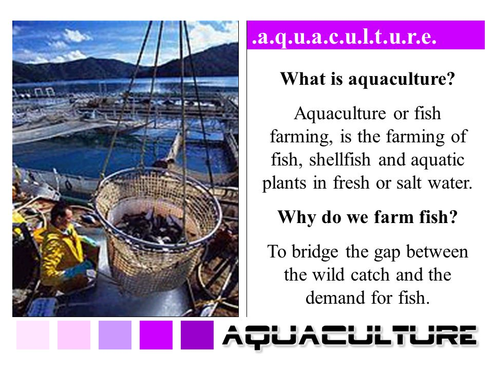 .a.q.u.a.c.u.l.t.u.r.e. What is aquaculture? Aquaculture or fish farming, is the farming of fish, shellfish and aquatic plants in fresh or salt water.