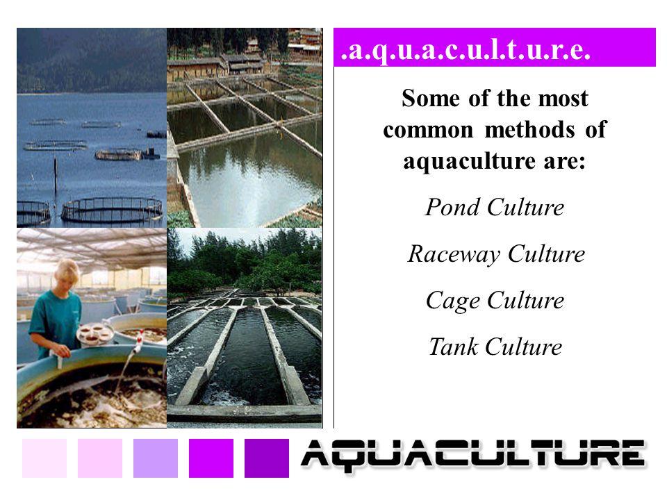 Some of the most common methods of aquaculture are: Pond Culture Raceway Culture Cage Culture Tank Culture.a.q.u.a.c.u.l.t.u.r.e.