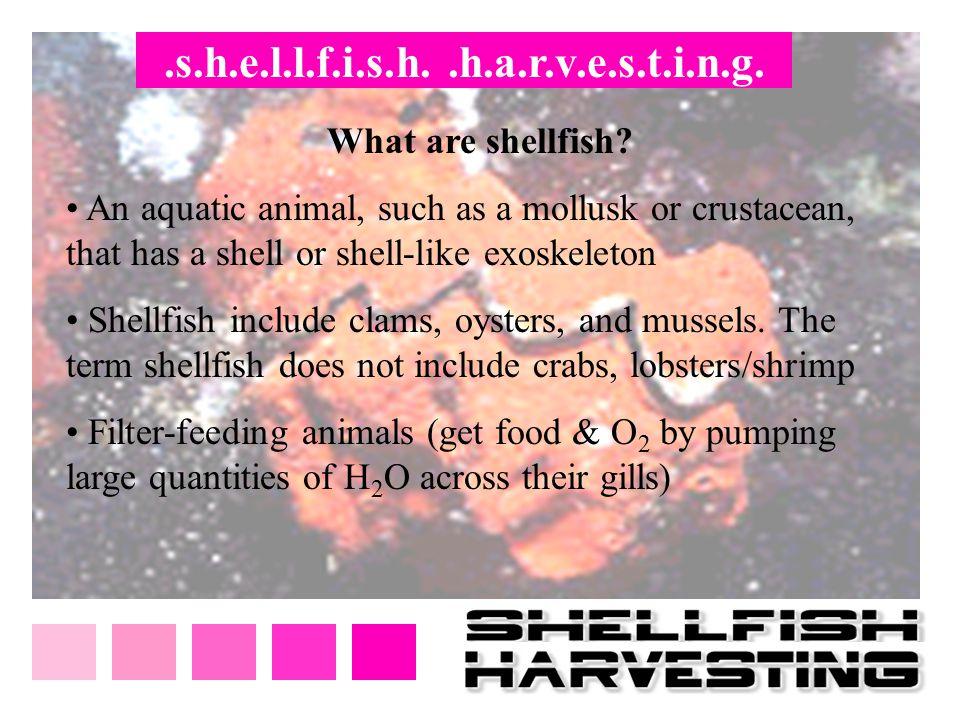 .s.h.e.l.l.f.i.s.h..h.a.r.v.e.s.t.i.n.g. What are shellfish? An aquatic animal, such as a mollusk or crustacean, that has a shell or shell-like exoske