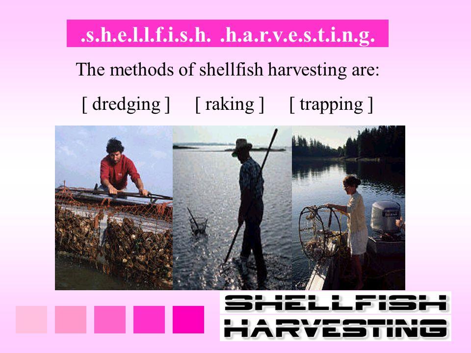.s.h.e.l.l.f.i.s.h..h.a.r.v.e.s.t.i.n.g. The methods of shellfish harvesting are: [ dredging ] [ raking ] [ trapping ]