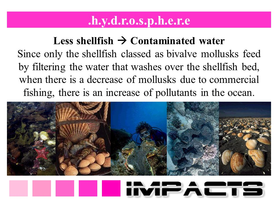 .h.y.d.r.o.s.p.h.e.r.e Less shellfish  Contaminated water Since only the shellfish classed as bivalve mollusks feed by filtering the water that washe