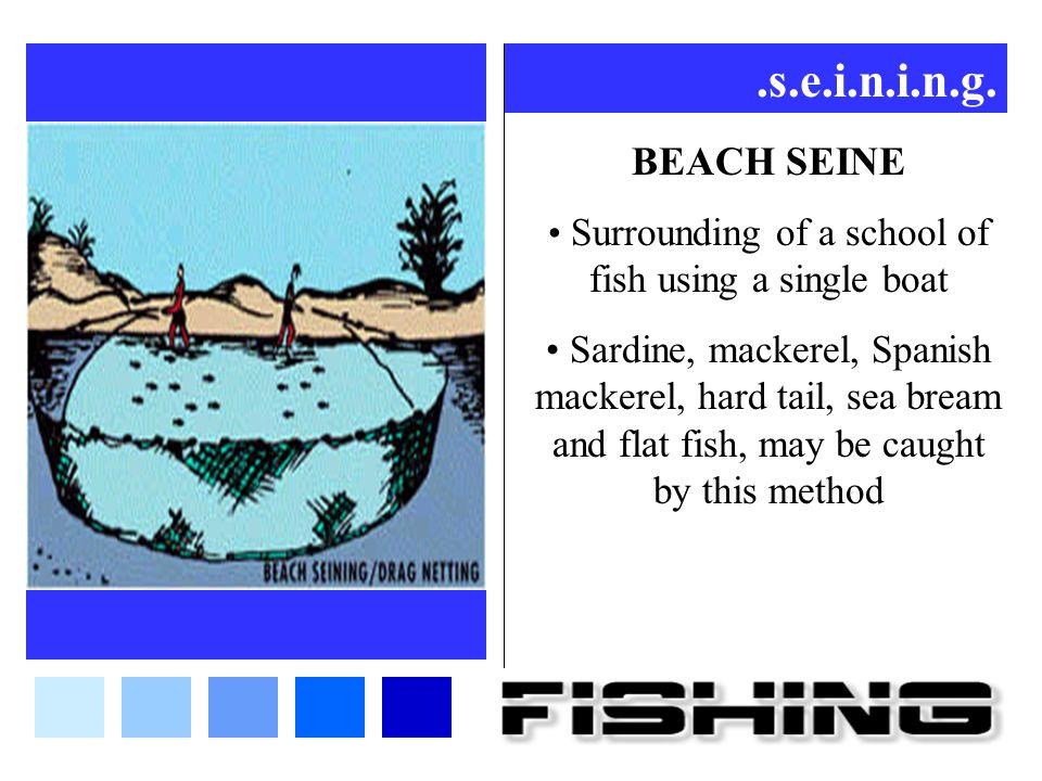 .s.e.i.n.i.n.g. BEACH SEINE Surrounding of a school of fish using a single boat Sardine, mackerel, Spanish mackerel, hard tail, sea bream and flat fis