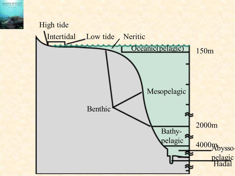 High tide IntertidalLow tide Oceanic(pelagic) Neritic Mesopelagic Benthic Bathy- pelagic Abysso- pelagic Hadal 2000m 150m 4000m