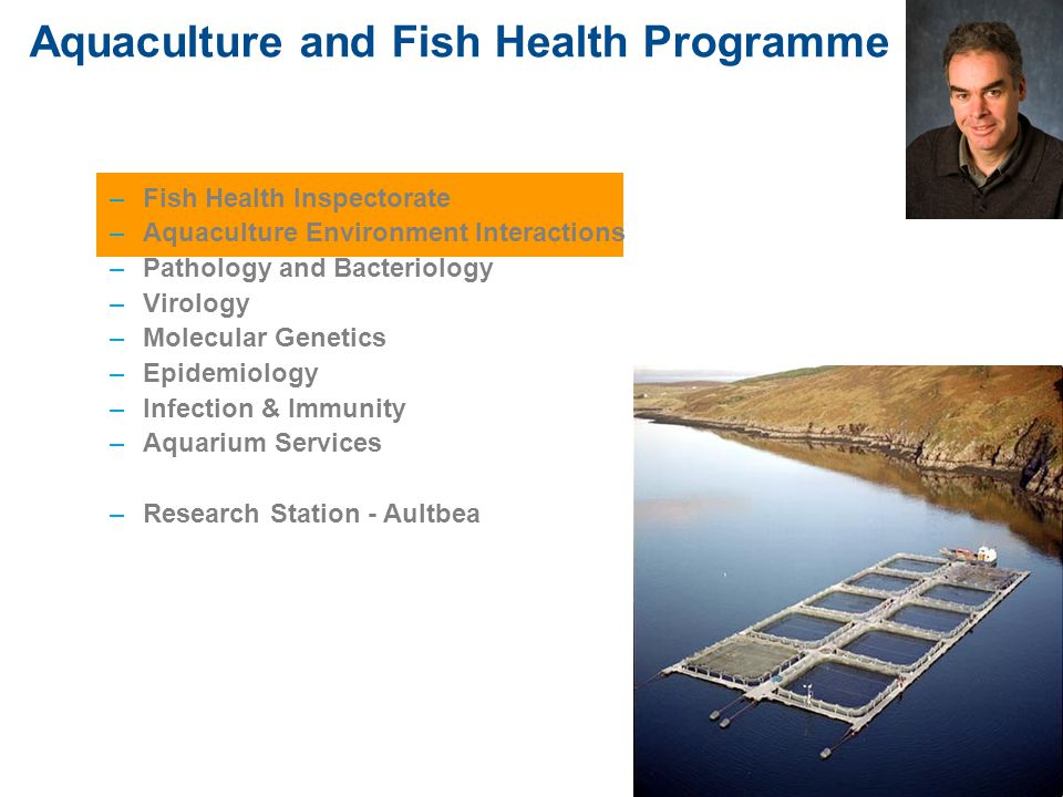 Fish Health, Containment and Sea Lice (Planning) Katy Urquhart Fish Health Inspectorate (FHI) comment on: disease risk implications, fish health and welfare, sea lice control containment Considerations: Location and proximity to other aquaculture sites –Comment on any sites within 1000m MSS disease Management Areas Surveillance and control of notifiable diseases –Check existing MA's won't conjoin –State which MA site will be in and advise to operate within agreement with all operators in this area (synchronous fallowing and treatments, single year class)