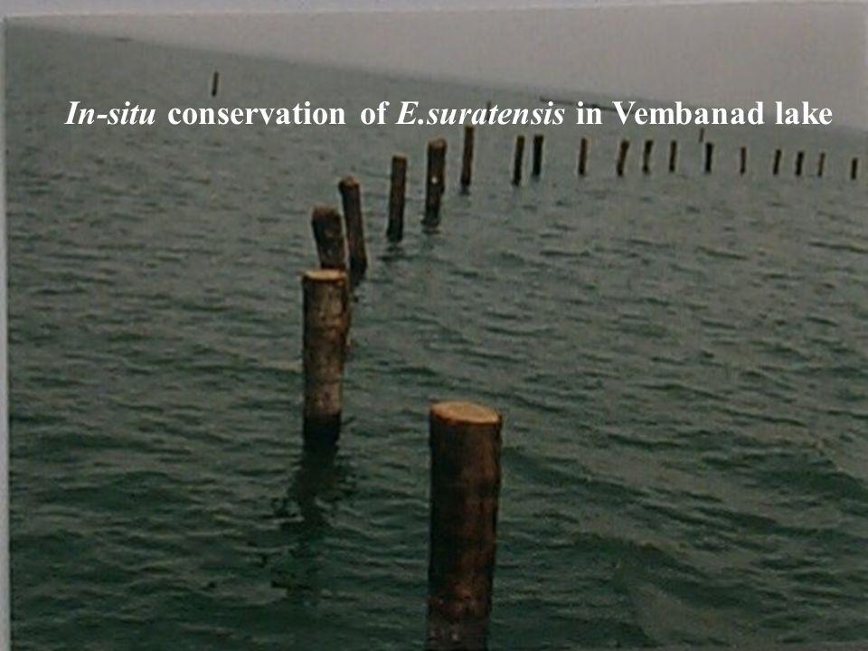 Established by RARS, Kumarakom