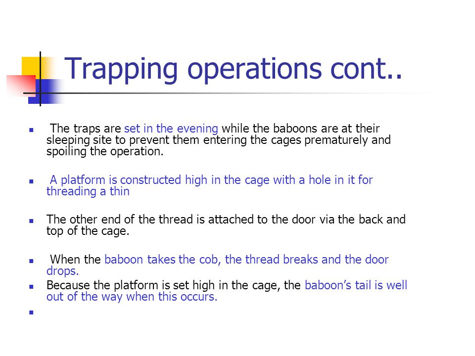 The transfer process Once the baboons are trapped they are transferred to holding/transport cages.