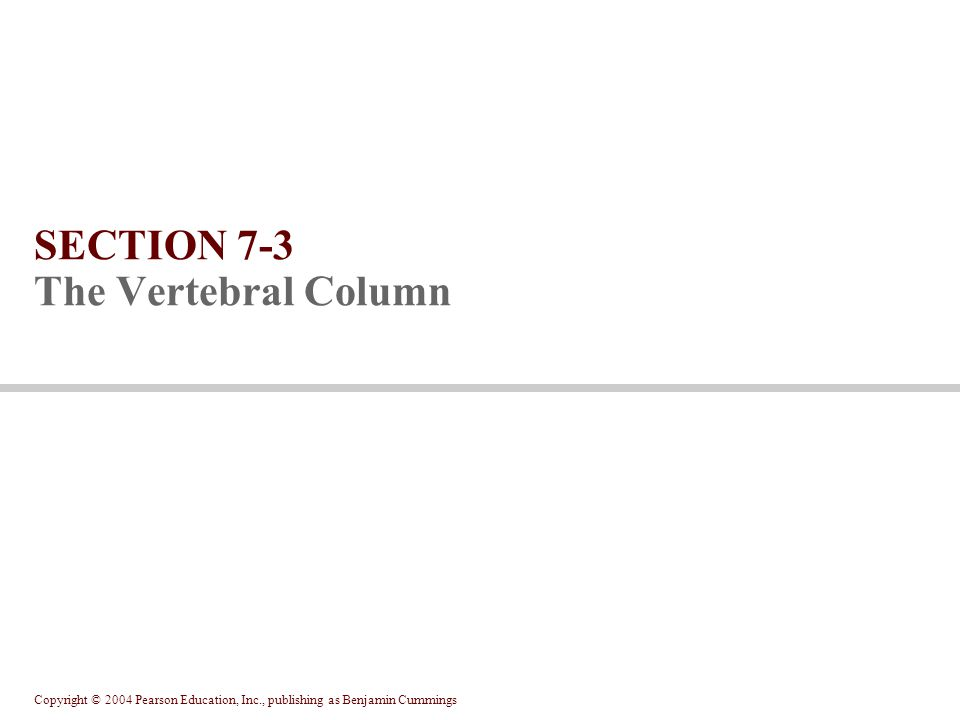 Copyright © 2004 Pearson Education, Inc., publishing as Benjamin Cummings SECTION 7-3 The Vertebral Column