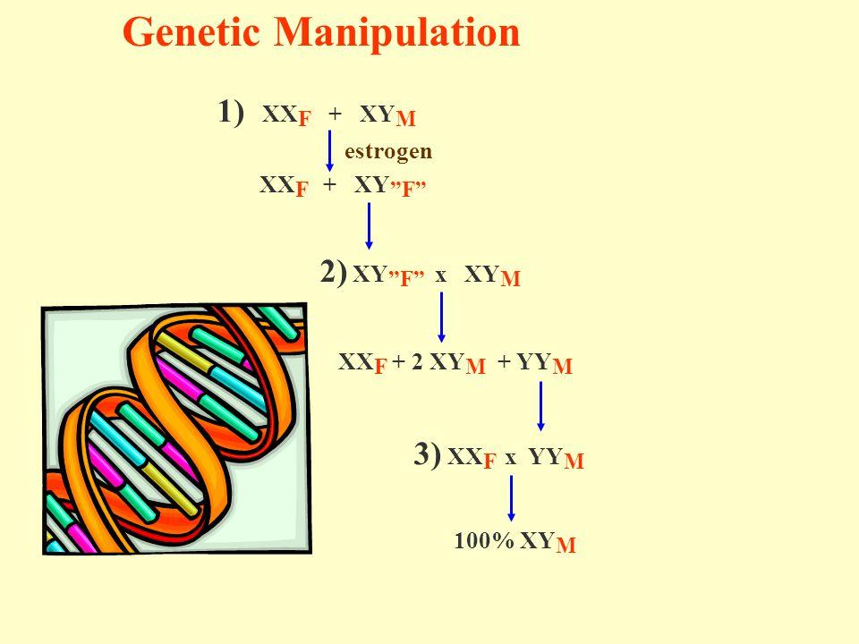 Genetic Manipulation 1) XX F + XY M estrogen XX F + XY F 2) XY F x XY M XX F + 2 XY M + YY M 3) XX F x YY M 100% XY M