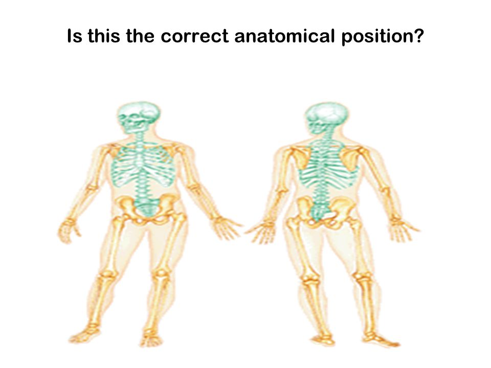 Is this the correct anatomical position?