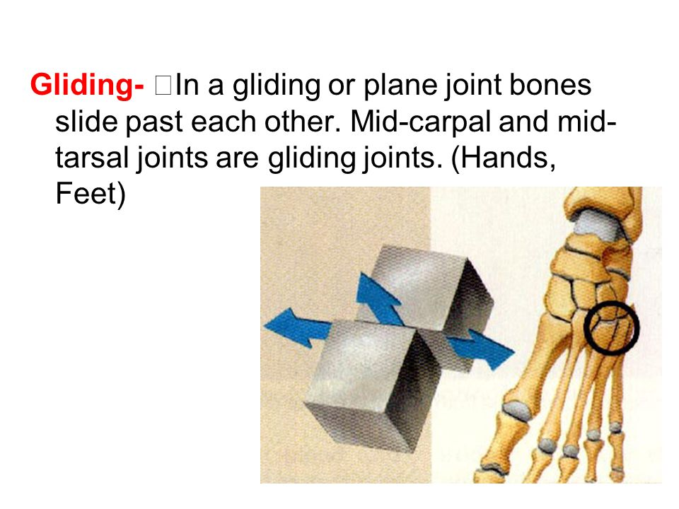 Gliding- In a gliding or plane joint bones slide past each other.