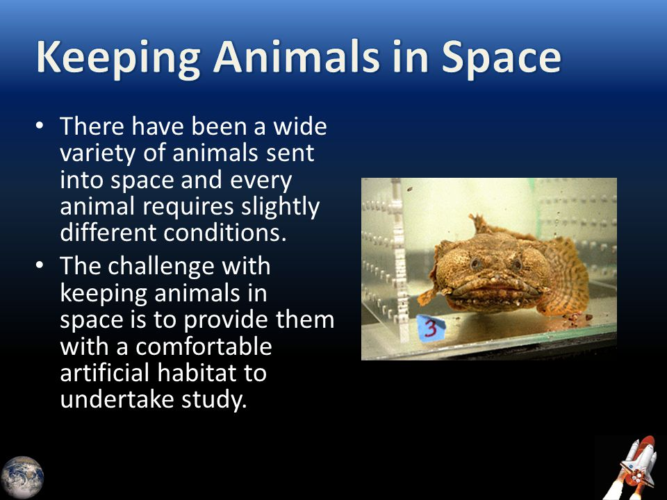 There have been a wide variety of animals sent into space and every animal requires slightly different conditions. The challenge with keeping animals