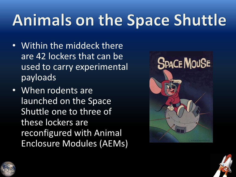 Within the middeck there are 42 lockers that can be used to carry experimental payloads When rodents are launched on the Space Shuttle one to three of