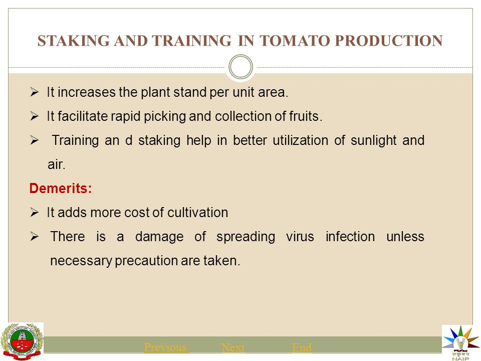 STAKING AND TRAINING IN TOMATO PRODUCTION Previous NextEnd  It increases the plant stand per unit area.