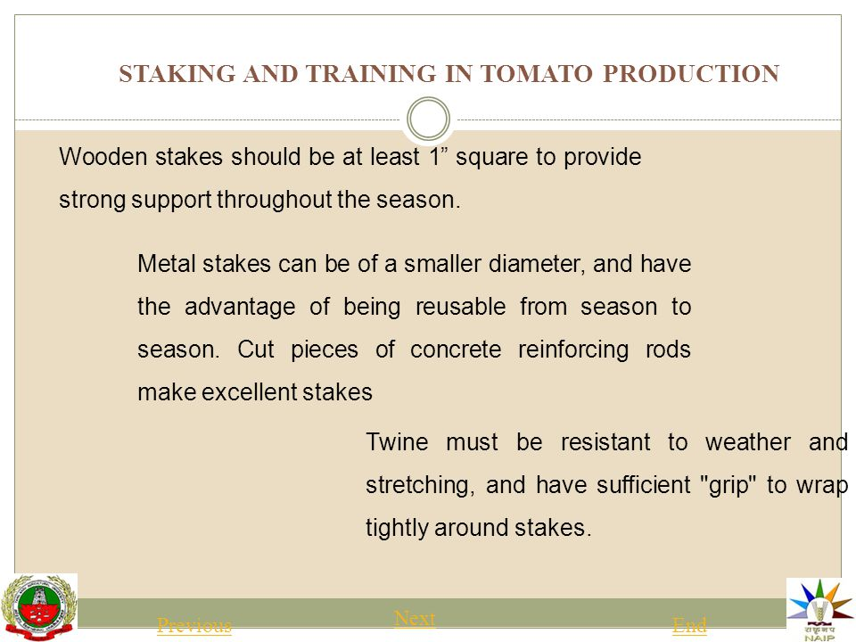 STAKING AND TRAINING IN TOMATO PRODUCTION Previous NextEnd A variation of this system called the Florida weave establishes the first line by weaving from one side of the plant row to the other, alternating around each stake.