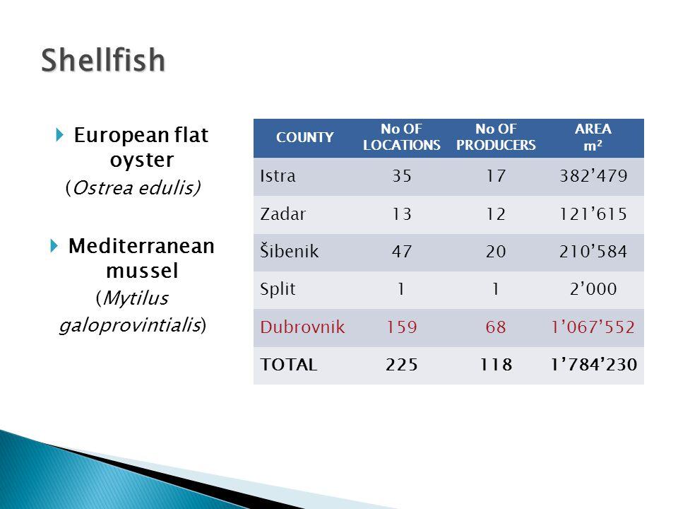  Seabass (Dicentartus labrax)  Seabream (Sparus aurata)  European flat oyster (Ostrea edulis)  Mediterranean mussel (Mytilus galoprovintialis) COUNTY No OF LOCATIONS No OF PRODUCERS AREA m 2 ISTRA 11113'560 RIJEKA 1142'606 ZADAR 2115'000 SPLIT 5497'970 DUBROVNIK 1133'600 TOTAL 108302'736 Finfish & shellfish