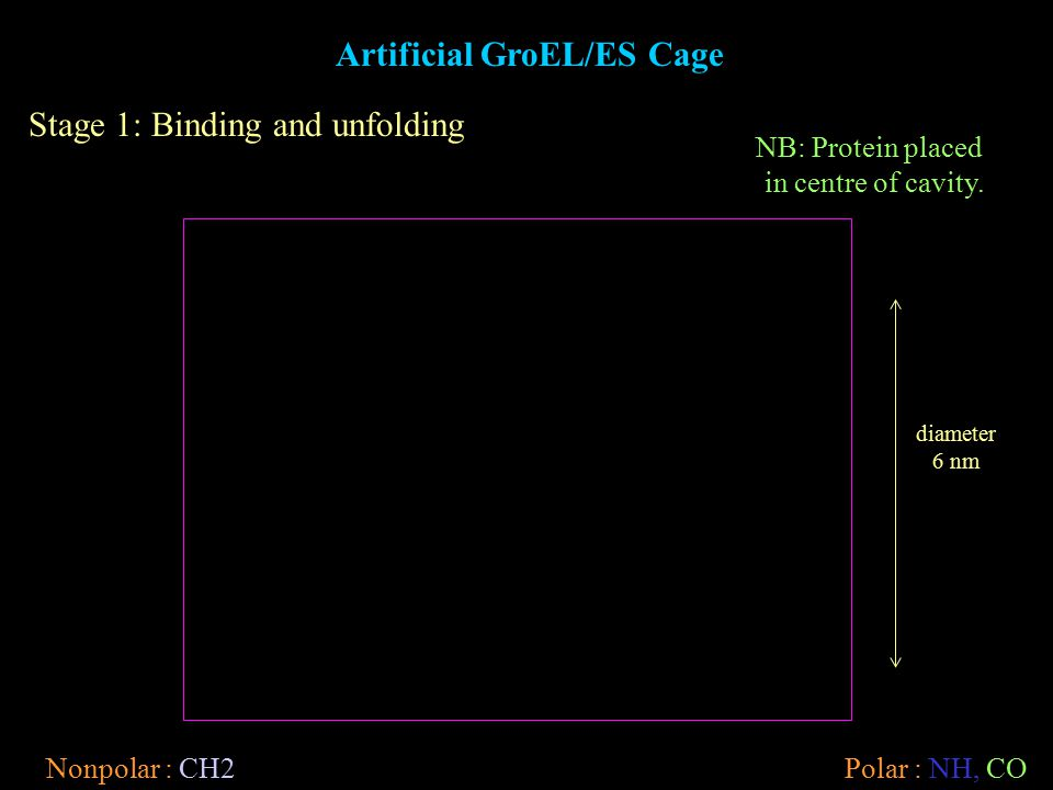 Stage 1: Binding and unfolding Nonpolar : CH2Polar : NH, CO diameter 6 nm Artificial GroEL/ES Cage NB: Protein placed in centre of cavity.
