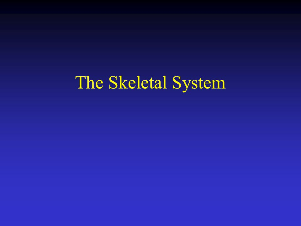 Axial skeleton Skull Vertebral column Rib cage –Ribs –Sternum