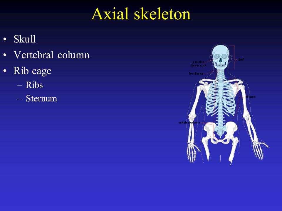 Skull: cranium + face Cranial bones: –Frontal –Parietal –Temporal –Occipital –Sphenoid –Ethmoid