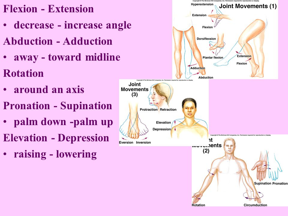 Flexion - Extension decrease - increase angle Abduction - Adduction away - toward midline Rotation around an axis Pronation - Supination palm down -palm up Elevation - Depression raising - lowering