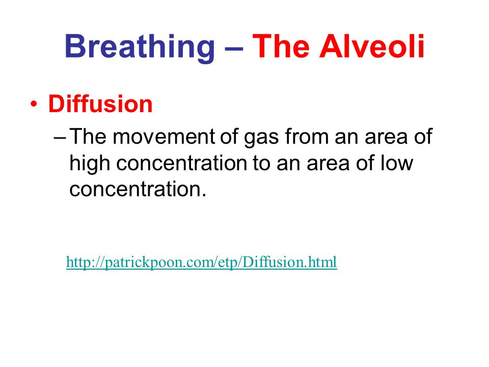 Breathing – The Lungs Breathing animation Write a paragraph explanation/ summary on how breathing works.