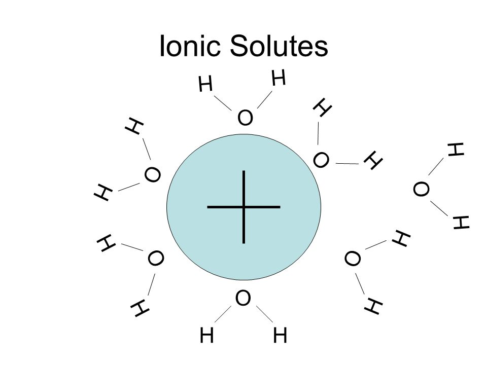 Ionic Solutes H O H H O H H O H H O H H O H H O H H O H