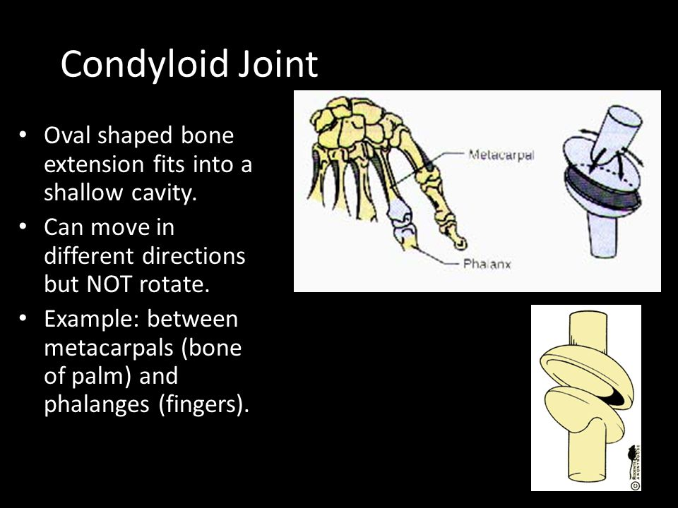 Condyloid Joint Oval shaped bone extension fits into a shallow cavity.