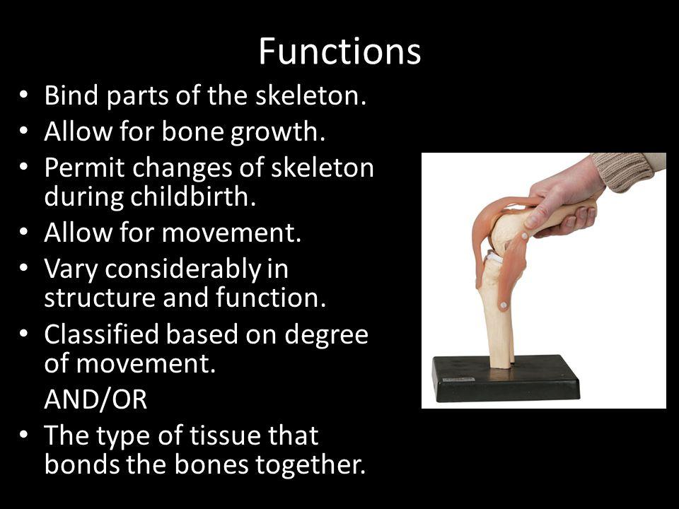 Functions Bind parts of the skeleton. Allow for bone growth.