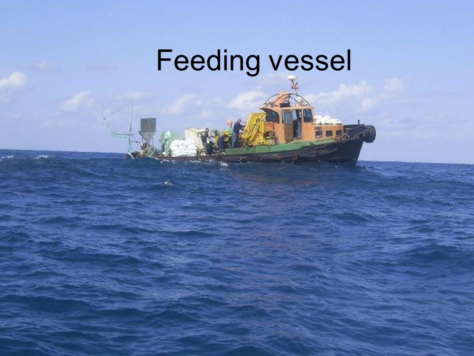 Feeding vessel
