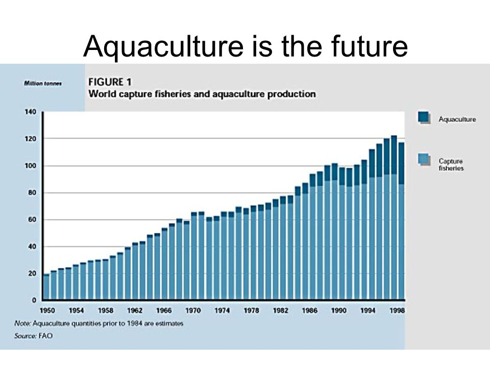 Aquaculture is the future