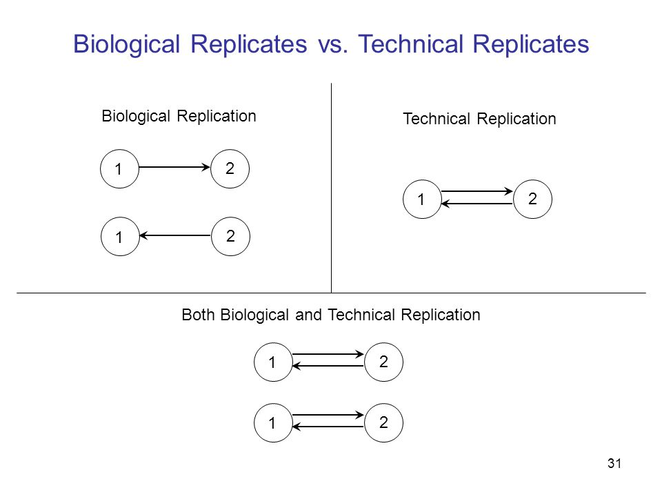 31 Biological Replicates vs.