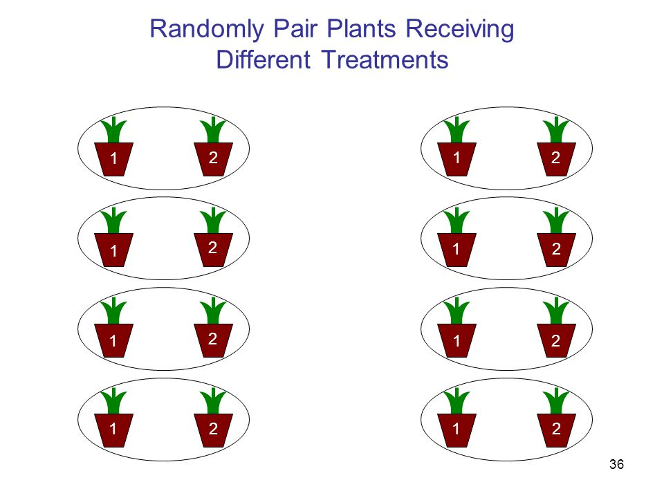 36 Randomly Pair Plants Receiving Different Treatments 222 22 2 22 1 11 11 1 1 1