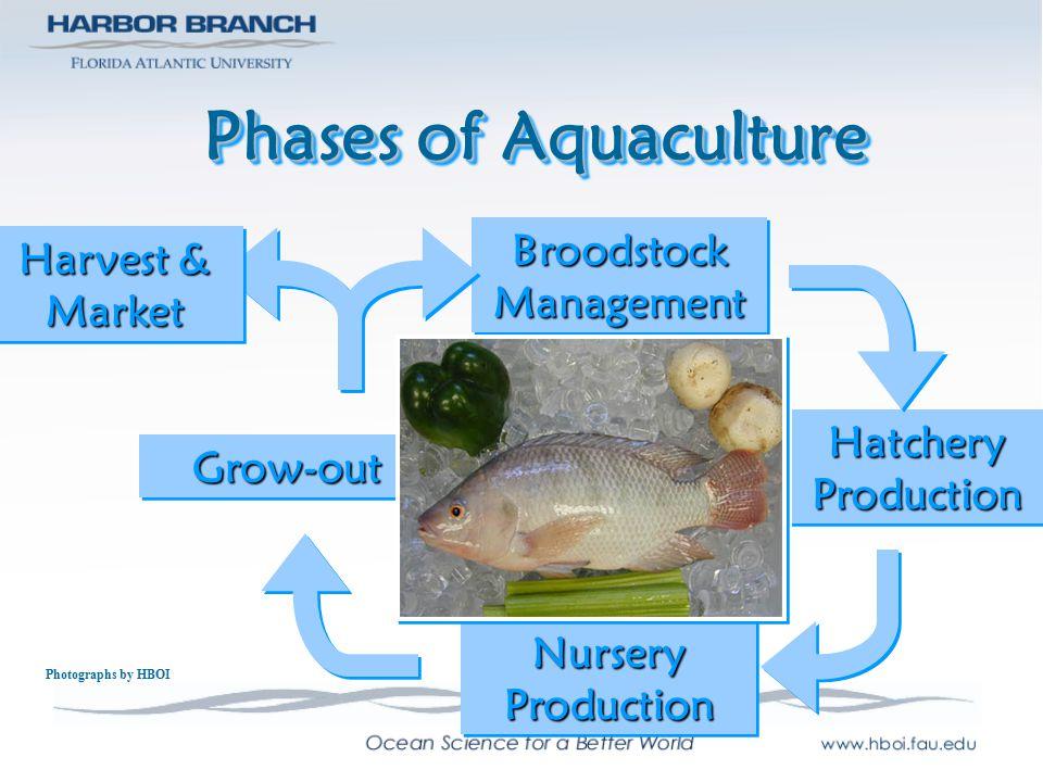 Phases of Aquaculture BroodstockManagementBroodstockManagement HatcheryProductionHatcheryProduction NurseryProductionNurseryProduction Grow-outGrow-ou