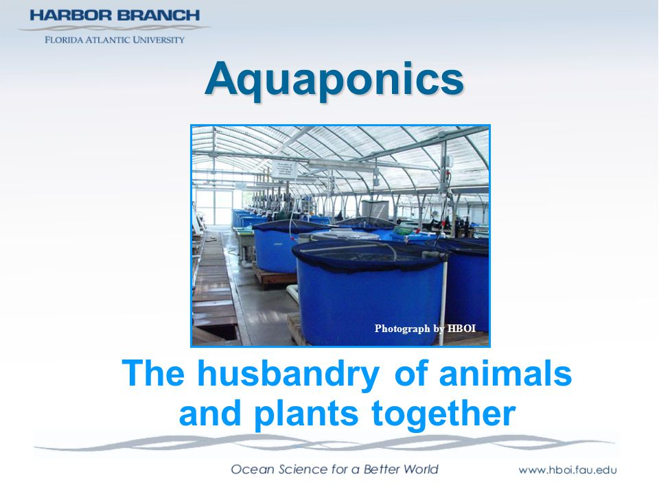 Aquaculture is Agriculture The husbandry of freshwater and marine organisms is no different than their terrestrial counterparts.