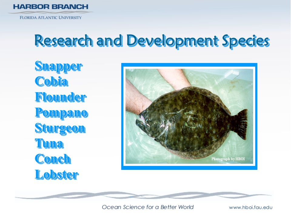 Phases of Aquaculture BroodstockManagementBroodstockManagement HatcheryProductionHatcheryProduction NurseryProductionNurseryProduction Grow-outGrow-out Harvest & Market Photographs by HBOI