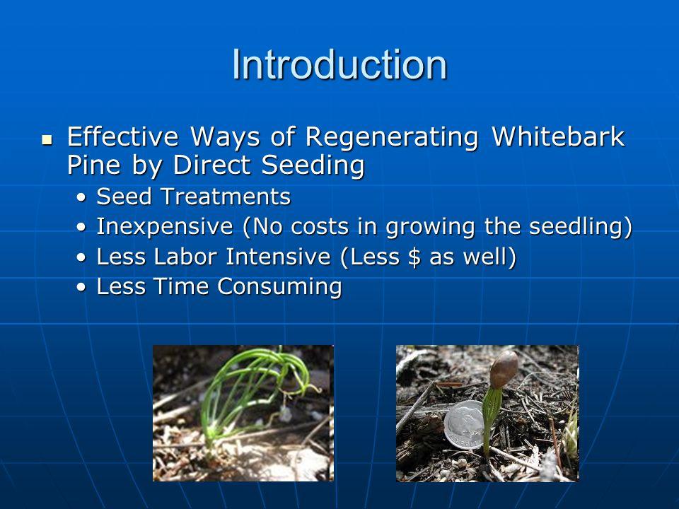 Introduction Effective Ways of Regenerating Whitebark Pine by Direct Seeding Effective Ways of Regenerating Whitebark Pine by Direct Seeding Seed Trea